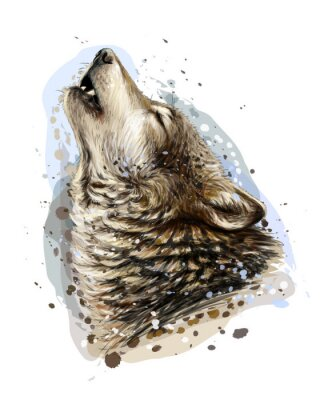 Posters The wolf howls. Sketchy, graphical, color portrait of a wolf head on a white background with splashes of watercolor.