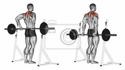 Posters Tige à l arrière du delta. Exercice pour la musculation. Les muscles fa89cacbb06