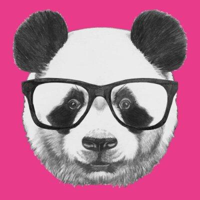 Posters Tiré par la main portrait de panda avec des lunettes. Vecteur isolé éléments.
