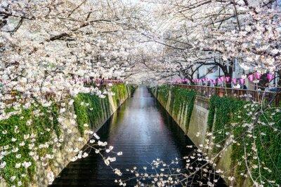 Posters tokyo, Japon à Meguro canal au printemps.