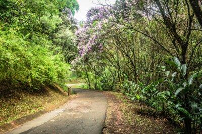 Posters Trilha entre árvores em um parque em São Paulo
