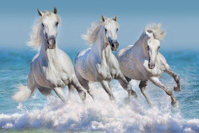 Posters Trois, blanc, Cheval, course, galop, vagues, océan