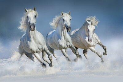 Posters Trois, blanc, équitation, course, galop, neige