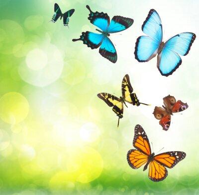 Posters Tropical, papillons, jardin