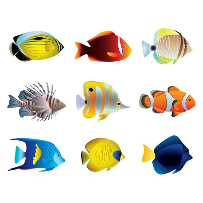 Posters Tropical poissons vecteur ensemble