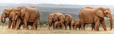 Posters Troupeau d'éléphants