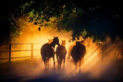 Posters Troupeau de chevaux