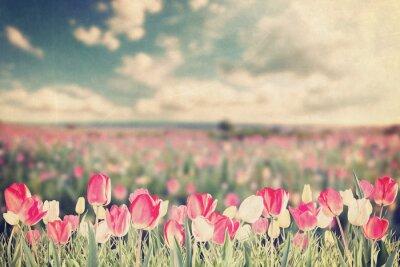 Posters Tulipe, fleurs, pré, vendange