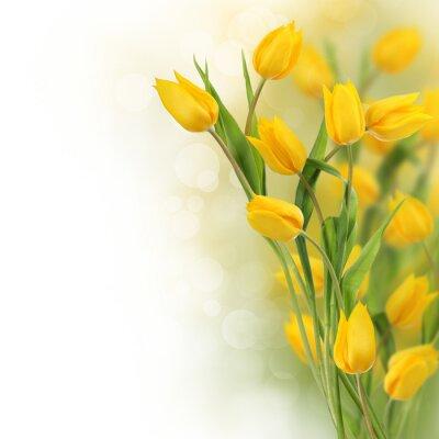 Tulipes jaunes avec copie espace