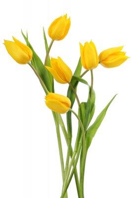 Tulipes jaunes sur fond blanc