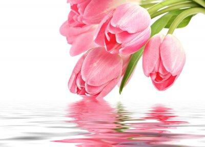 Tulipes roses avec la réflexion de l'eau et de l'espace de copie