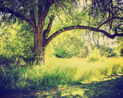 Posters une forêt ou un parc avec des arbres avec les feuilles d'automne fait avec un retr