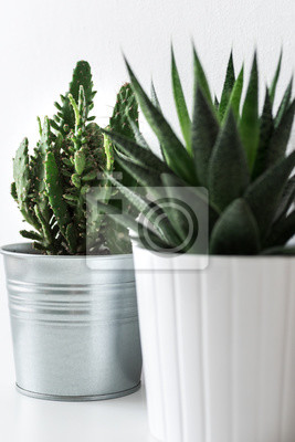 Various cactus and succulent plants in different pots close up. Modern room decoration. Cactus house plants collection.