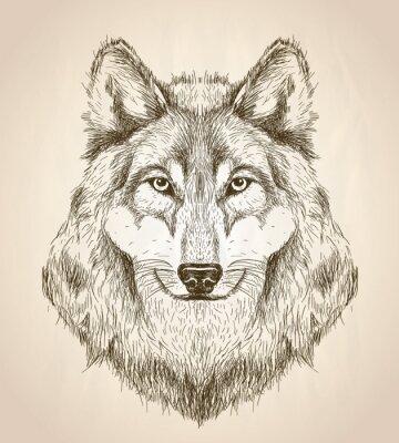 Posters Vecteur, croquis, Illustration, loup, tête, devant, vue