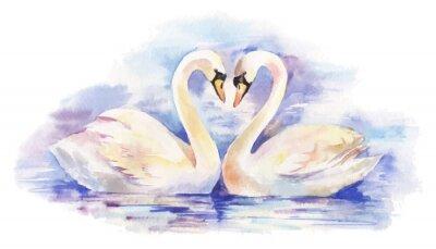 Posters vecteur illustration d'aquarelle d'un couple de cygnes blancs