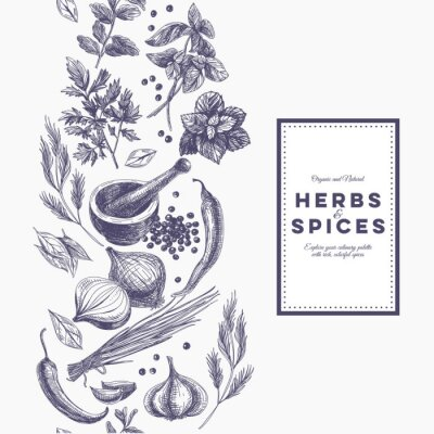 Posters Vectoriel de fond avec des herbes dessinées à la main et des épices.