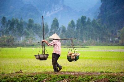 Posters Vietnamien, paysan, riz, paddy, champ, Ninh, Binh, Tam, Coc L'agriculture biologique en Asie