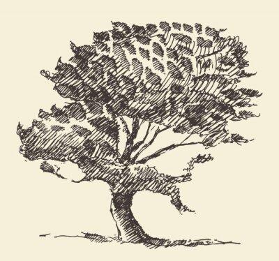 Posters Vieux, arbre, vendange, Illustration, main, dessiné, croquis