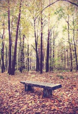 Posters Vintage image filtrée de banc dans une forêt.