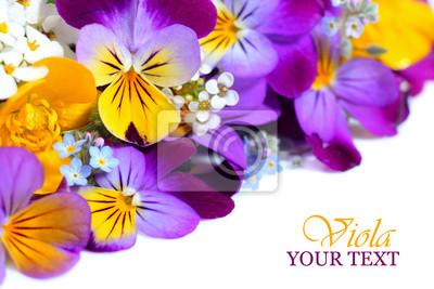 Viola frontière fleurs