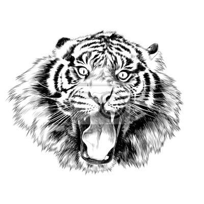 Visage De Tigre Avec Bouche Ouverte Croquis Vecteur Graphique