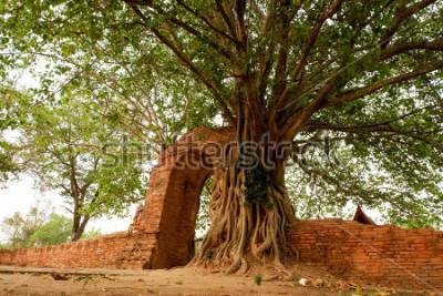 Posters Wat Phra Ngam (abandonné) Porte du temps d'Ayutthaya L'arc est fermé par le pho.