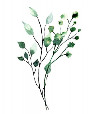 Posters Watercolor branch with green leaves. Hand painting floral illustration. Leaf, plant isolated on white background.