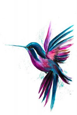 Posters Watercolor Hummingbird flying and isolated on white background. Rainbow bird. Tropical colibri watercolor illustration.