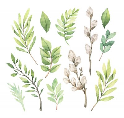 Posters Watercolor illustrations with eucalyptus, green leaves and willow. Easter brunches. Spring greenery design elements. Perfect for cards, invitations, banners, posters.