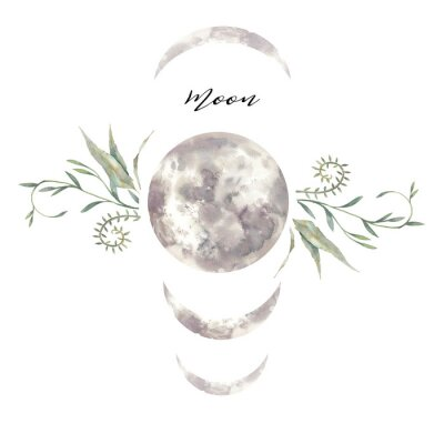 Posters Watercolor moon and plants label. Isolated logo design with plants and lunar silhouette