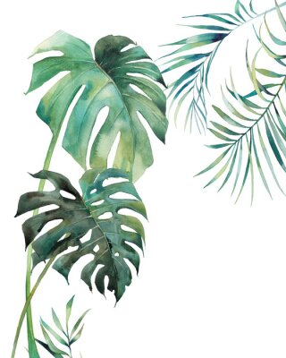 Posters Watercolor tropical leaves poster. Hand painted exotic monstera and palm green branches isolated on white background. Summer plants illustration
