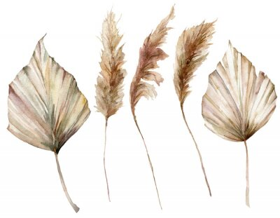 Posters Watercolor tropical set with dry palm leaves and pampas grass. Hand painted exotic leaves isolated on white background. Floral illustration for design, print, fabric or background.