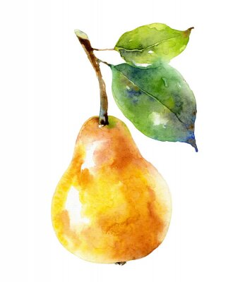 Posters Watercolor yellow pear isolated on white background