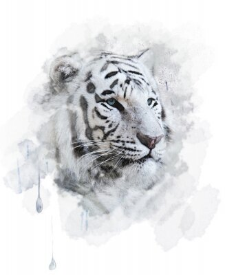 Posters White Tiger