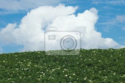 夏 の 雲 と ジャガイモ 畑