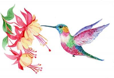 Posters Акварель, маленькая птичка колибри, иллюстрация