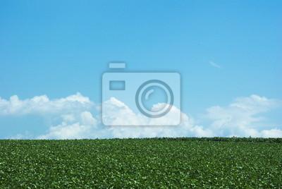 緑 の 大地 と 空