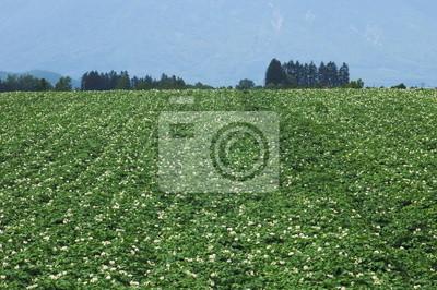 ジャガイモ 畑 と 小さな 森