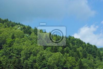 北海道 夏 の 森林