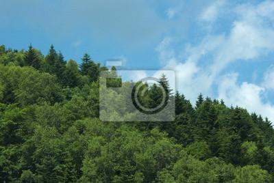 北海道 森 の 風景