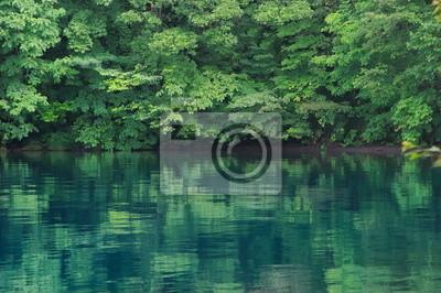 洞爺湖 湖畔 の 森