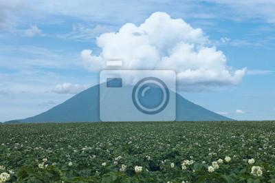 羊蹄山 と ジャガイモ 畑