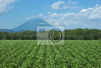 羊蹄山 と 大豆 畑