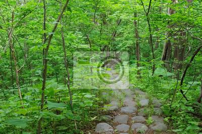 森 の 小道