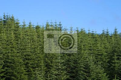 カラマツ の 森