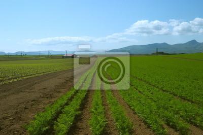 大豆 の 苗畑