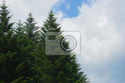 カラマツ 林