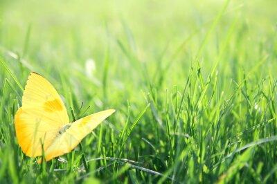 Posters Yellow Butterfly en fond d'herbe verte