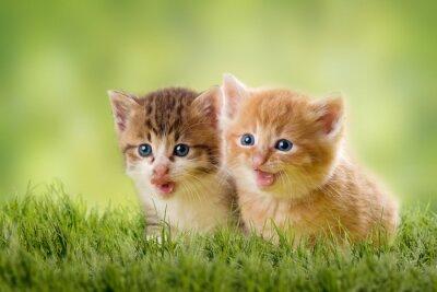 Posters zwei Katzenbabys