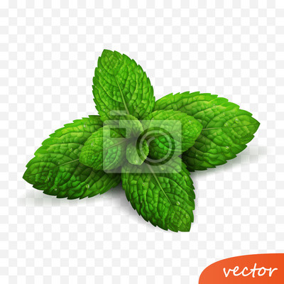 Sticker 3d realistic isolated vector sprout of fresh mint leaves with drops of dew